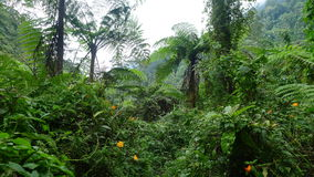 Tropical Forest. In Davao, Philippines stock images