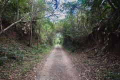 Tropical Forest Dirt Road Royalty Free Stock Photos