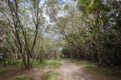 Tropical Forest Dirt Road Reserve Royalty Free Stock Photos