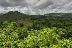 Tropical Forest, Dominican Republic Royalty Free Stock Images