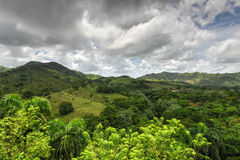 Tropical Forest, Dominican Republic Stock Photo