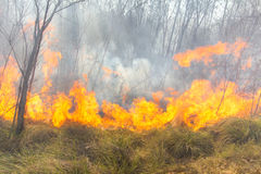 Tropical forest fire Stock Images