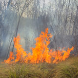Tropical forest fire Stock Photography