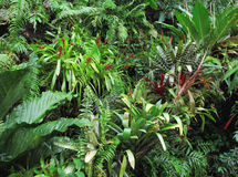 Tropical Forest Flora Background Royalty Free Stock Image