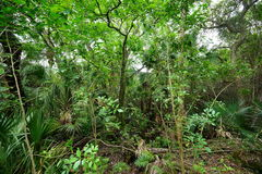 Tropical forest in Florida Royalty Free Stock Images