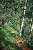 Tropical forest with footpath Royalty Free Stock Photo