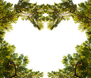 Tropical forest frame. On white background Royalty Free Stock Images