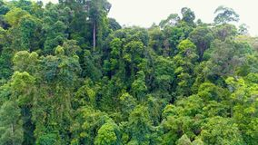 Tropical forest. Go backwards. Aerial. Thailand. stock footage