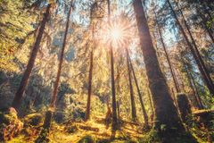 Tropical forest with green trees at sunset in autumn stock image