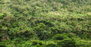 Tropical forest growing on hill, backgrount photo Stock Images