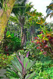 Tropical forest in Hawaii Royalty Free Stock Image