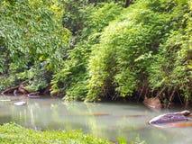 Tropical forest. inTatton National Park, Chaiyaphum. Thailand. Stock Photo