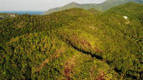 Tropical forest on island. Fantastic drone view of green jungle on mountain ridge of amazing tropical island. Blue sea. Exotic paradise panorama of rainforest stock footage