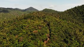 Tropical forest on island. Fantastic drone view of green jungle on mountain ridge of amazing tropical island. Exotic. Paradise panorama of rainforest stock footage