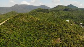 Tropical forest on island. Fantastic drone view of green jungle on mountain ridge of amazing tropical island. Exotic. Paradise panorama of rainforest stock video