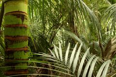 Tropical forest jungle Stock Photos