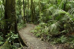 Tropical forest jungle Royalty Free Stock Photos