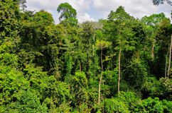 Tropical Forest of Kakum National Park, Ghana Royalty Free Stock Images