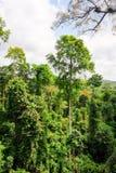 Tropical Forest of Kakum National Park, Ghana Royalty Free Stock Photos