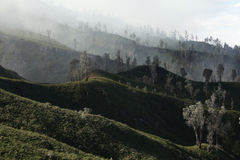 Tropical forest, Kawah Ijen volcano, East Java, Indonesia. Royalty Free Stock Images