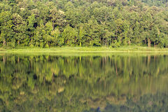 Tropical forest and lake Royalty Free Stock Photography