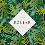 Tropical Forest Leaves Abstract Vector Background with Banner Template. Monstera Palm Leaf, Fern and other Foliage with. Retro Typography Frame. Classy Vintage Royalty Free Stock Images