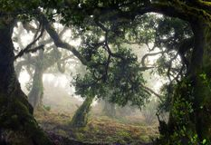 Tropical forest,Madeira Island Stock Images