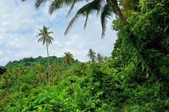 Tropical forest in Malaysia. Wild tropical forest in Malaysia Royalty Free Stock Images