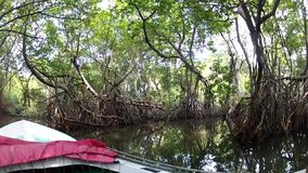 Tropical forest and mangroves. The journey down the river. Tropical forest and mangroves stock video