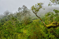 Tropical forest in the mist Stock Image