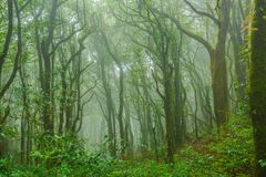 Tropical forest in the mist. Tropical rainforest in the mist at doi inthanon national park, Thailand Stock Photography