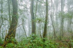 Tropical forest in the mist. Tropical rainforest in the mist at doi inthanon national park, Thailand Royalty Free Stock Photography
