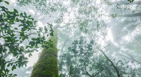 Tropical forest in the mist. Tropical rainforest in the mist at doi inthanon national park, Thailand Royalty Free Stock Photo