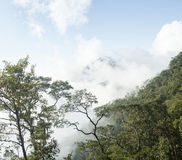 Tropical forest with misty cloud scenery Royalty Free Stock Photo