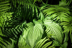 Tropical Forest with mixed plants and falling light. Mixed tropical plants with falling light and shadows stock photo