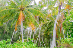 Tropical forest at Moorea island, French Polynesia Royalty Free Stock Photos