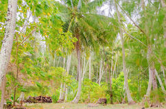 Tropical forest at Moorea island, French Polynesia Stock Photo