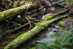 Tropical forest in Mount Field National Park, Tasmania. Australi Royalty Free Stock Photo