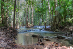 Tropical forest, Thailand, Asia Royalty Free Stock Image