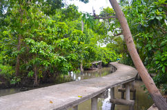 Tropical forest near the river Royalty Free Stock Images