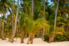 The tropical forest, palm trees on the beach background of palm trees. The tropical forest, palm trees on the beach background of palm trees Stock Photo