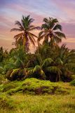 The tropical forest, palm trees on the beach background of palm trees. The tropical forest, palm trees on the beach background of palm trees Royalty Free Stock Photo