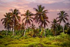 The tropical forest, palm trees on the beach background of palm trees. The tropical forest, palm trees on the beach background of palm trees Stock Photos