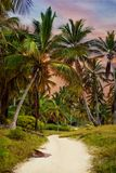 The tropical forest, palm trees on the beach background of palm trees. The tropical forest, palm trees on the beach background of palm trees Royalty Free Stock Image