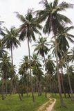 Tropical forest of palm trees. With rural road stock images