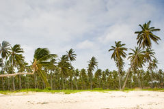 Tropical forest of palm on white sand beach Stock Photography