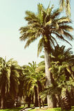 Tropical forest with palms Stock Photo