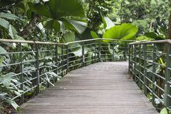 Tropical forest pathway. Pedestrian pathway with metallic handrails in tropical forest thicket in Singapore royalty free stock images
