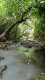 Tropical Forest. In the Philippines stock photo