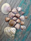 Beach  sea ​​shells Stock Image